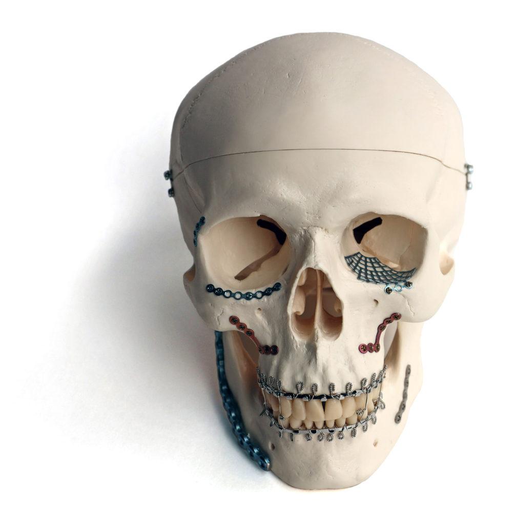 replica of a skull