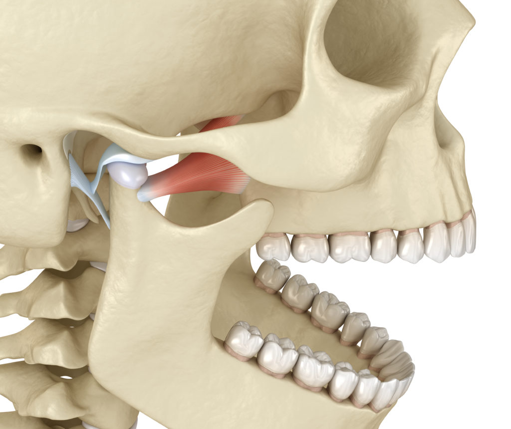 The temporomandibular joints